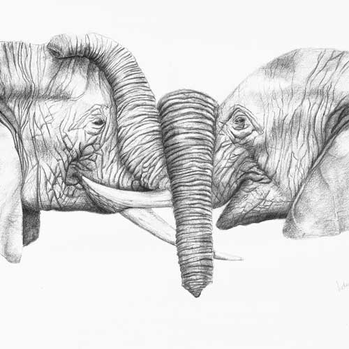 Elephant Pair, Digital Print From Pencil Original